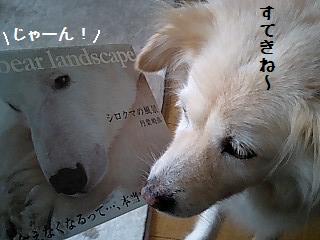 じゃーん!.jpg