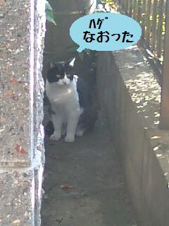 なおった.jpg