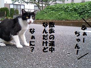 ふぁーちゃん.jpg