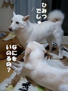七夕.jpg