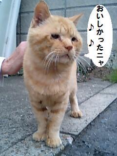 1丁目のトラちゃん.jpg