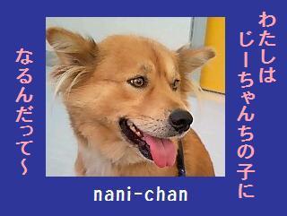 nani-chan.jpg
