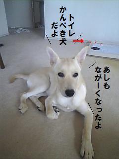かんぺき犬.jpg