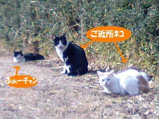 ふぁーちゃん2008.2.jpg