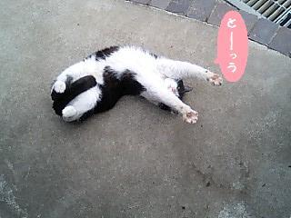 ふぁーチャン・しっぽ2.jpg